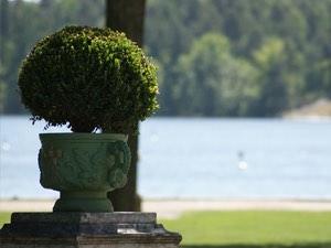 buchsbaum eiben hecken jetzt online kaufen. Black Bedroom Furniture Sets. Home Design Ideas